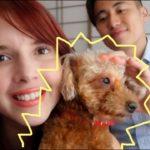 WE'RE ADOPTING A SHELTER DOG! 保護犬を迎えました!