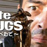 閲覧注意!昆虫を食す・・・【#138】