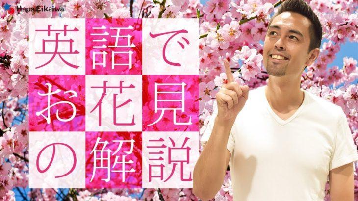日本の美しい文化「お花見」を英語で説明しよう【#193】