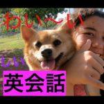 ハッピー英会話レッスン#169 犬好き同士のかわいい英会話