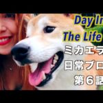Dating My Doge 柴犬とデート ♥️ Day In The Life #6 ミカエラの日常ブログ第6話