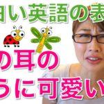 """虫の耳のように可愛い?""""Cute as a bug's ear!""""〔# 203〕"""