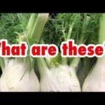 英語で野菜クイズ。この野菜知ってる?in カナダ
