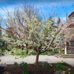 How one tree grows 40 different kinds of fruit | Sam Van Aken