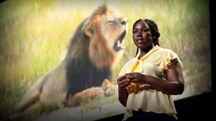 How community-led conservation can save wildlife   Moreangels Mbizah