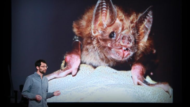 What vaccinating vampire bats can teach us about pandemics | Daniel Streicker