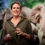 How bees can keep the peace between elephants and humans   Lucy King