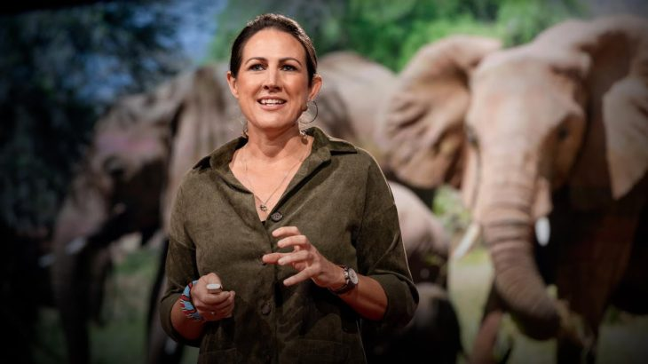 How bees can keep the peace between elephants and humans | Lucy King