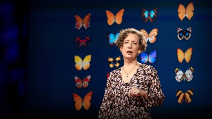 How you can help save the monarch butterfly — and the planet | Mary Ellen Hannibal