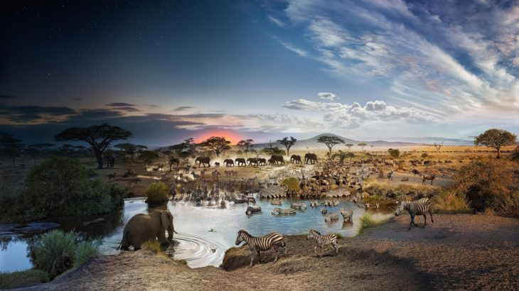 24 hours on Earth — in one image   Stephen Wilkes